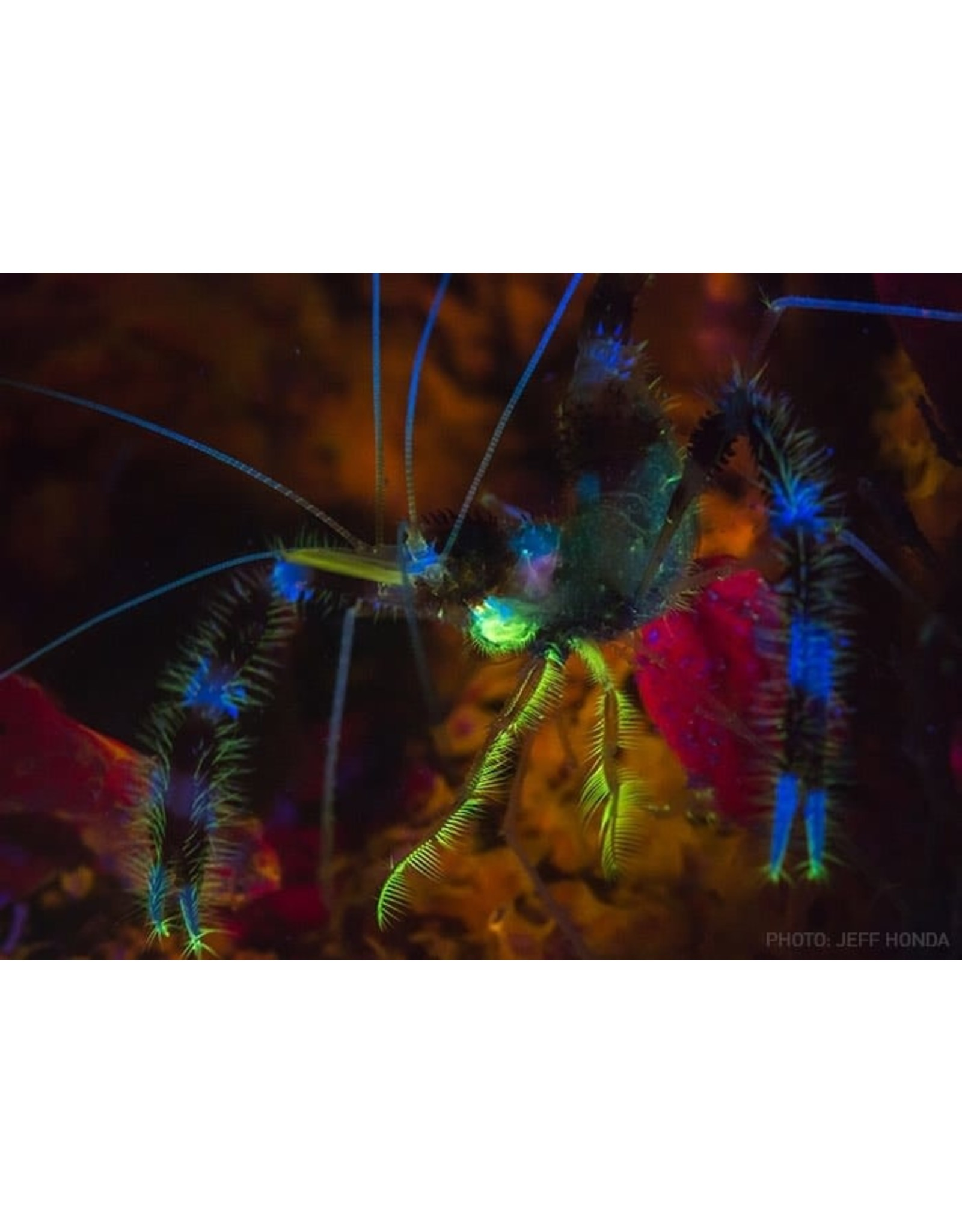 Light & Motion Light&Motion GoBe Nightsea Light
