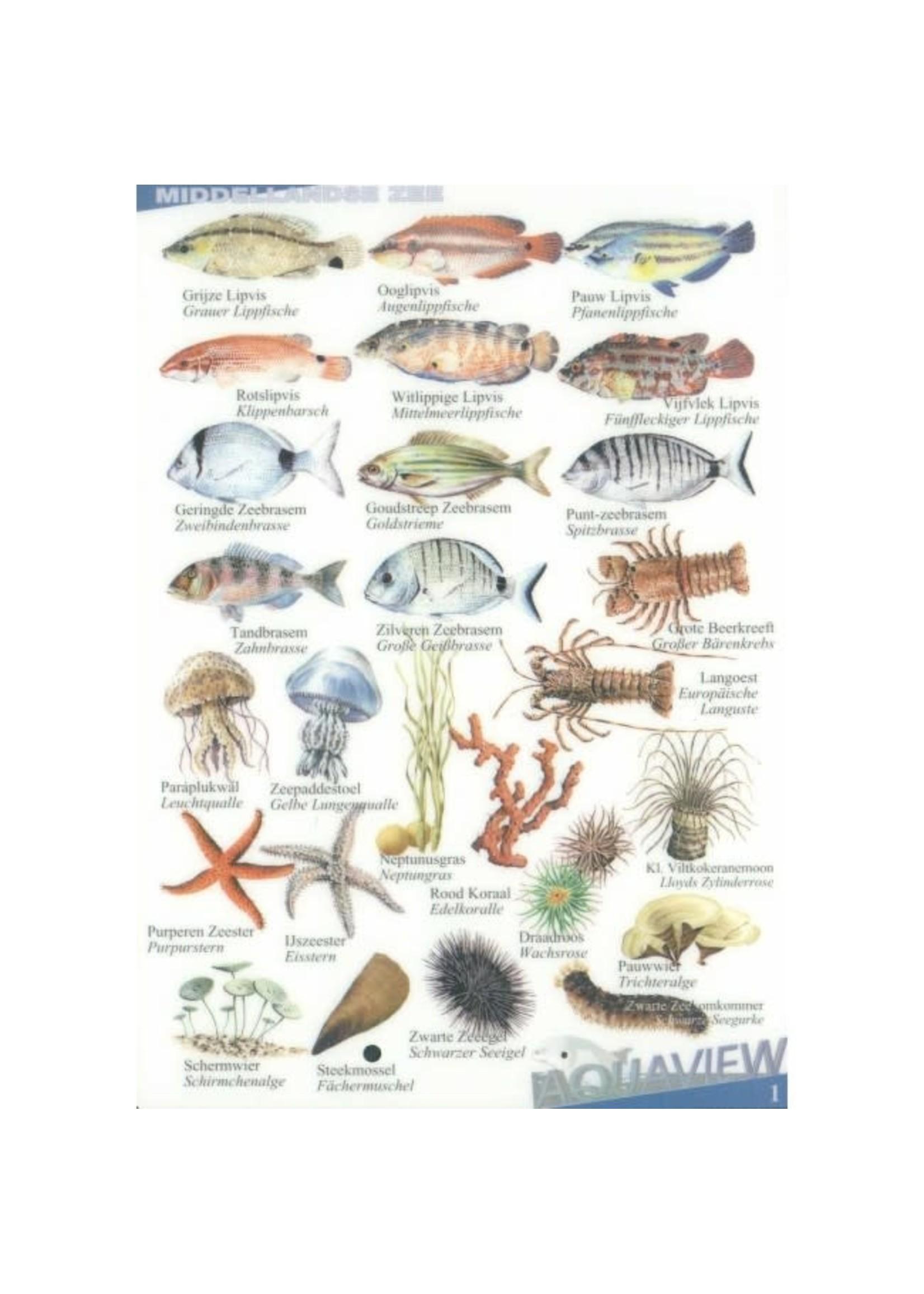 Aquaview watervaste vis-herkennings kaarten - diverse kaarten