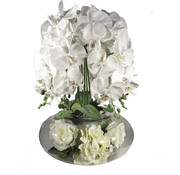L&M Bloemen - Orchidee Wit