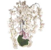 L&M Bloemen - Radiant Blossom