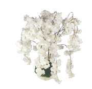 L&M Bloemen - Delicate Peony's White