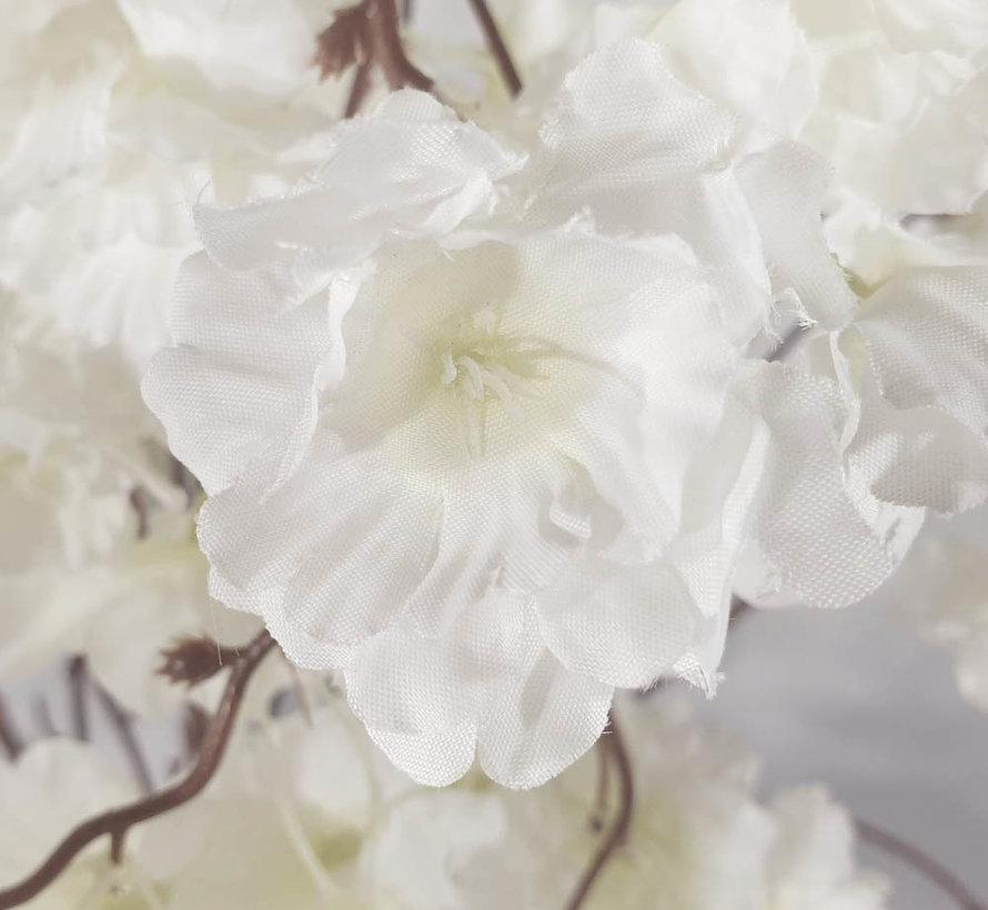 Bloemen - Delicate Peony's White