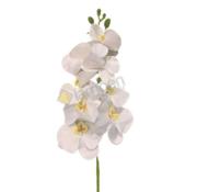 L&M Orchidee - tak - wit
