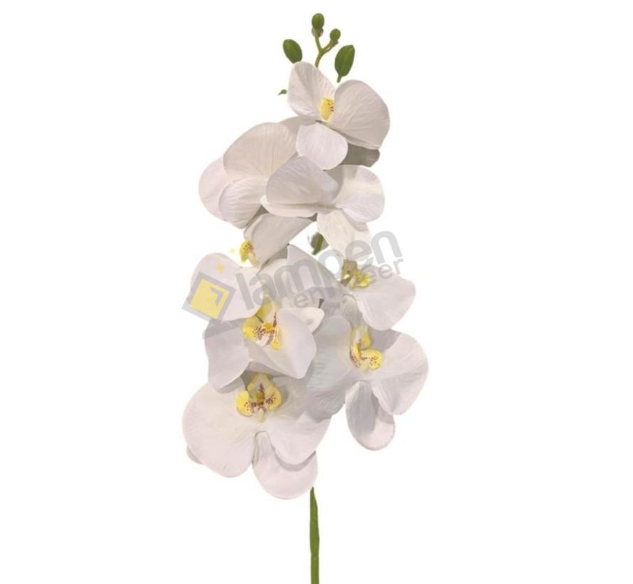 Orchidee - tak - wit