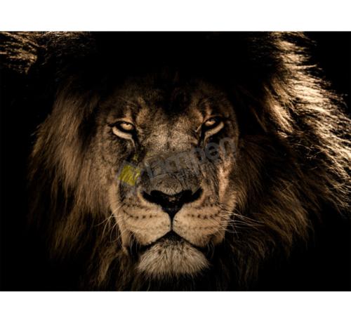 Ter Halle Lion-Glasschilderij-120x80