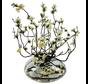 Appelbloesem Wit/Geel Kunstplant - Transparant pot