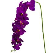 L&M Kunstorchidee - Tak - Violet - Phalaenopsis