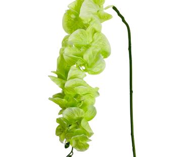 L&M Kunstorchidee - Tak - Groen - Phalaenopsis