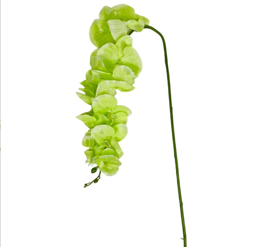 Kunstorchidee - Tak - Groen - Phalaenopsis