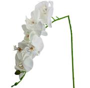 L&M Kunstorchidee - Tak - Wit - Phalaenopsis