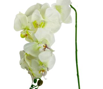L&M Kunstorchidee - Tak - Wit Groen - Phalaenopsis