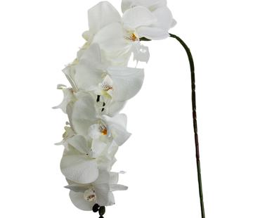 L&M Kunstorchidee - Donkere Tak - Wit - Phalaenopsis