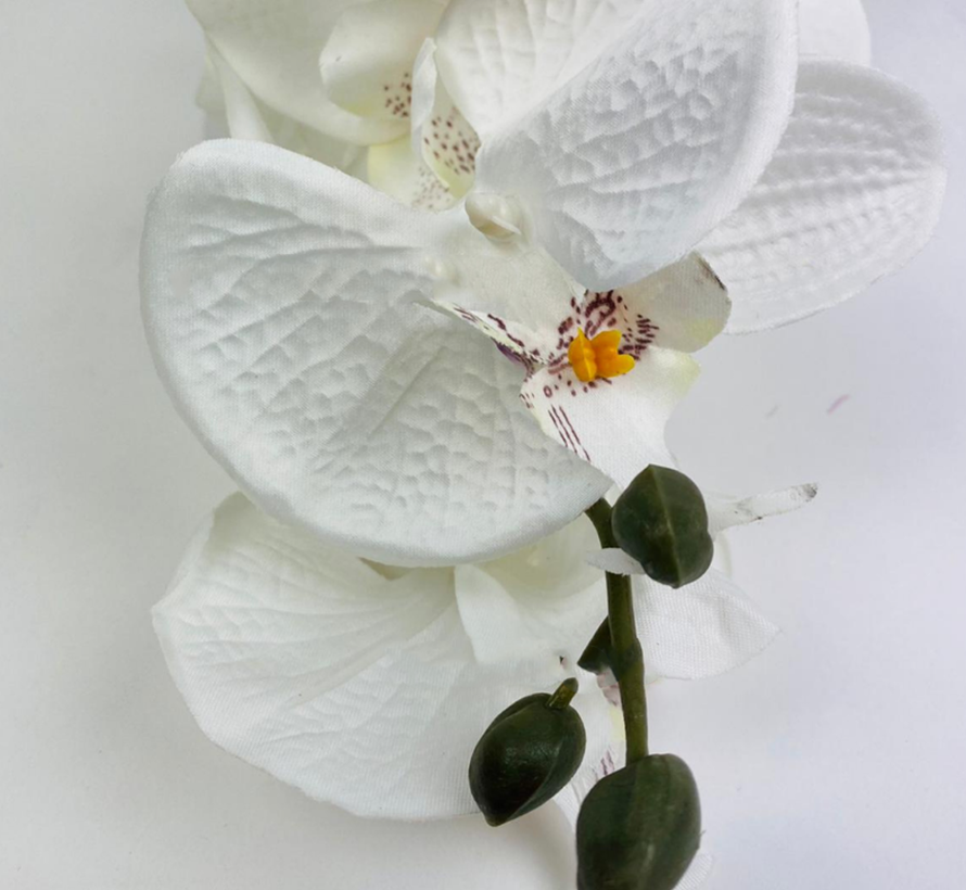 Kunstorchidee - Donkere Tak - Wit - Phalaenopsis