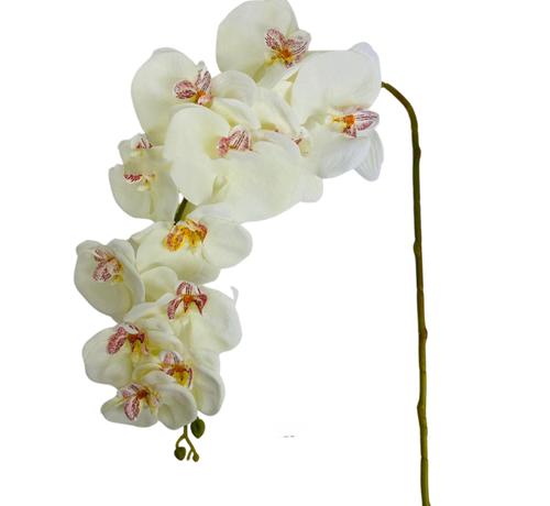 L&M Kunstorchidee - Tak - Beige - Phalaenopsis
