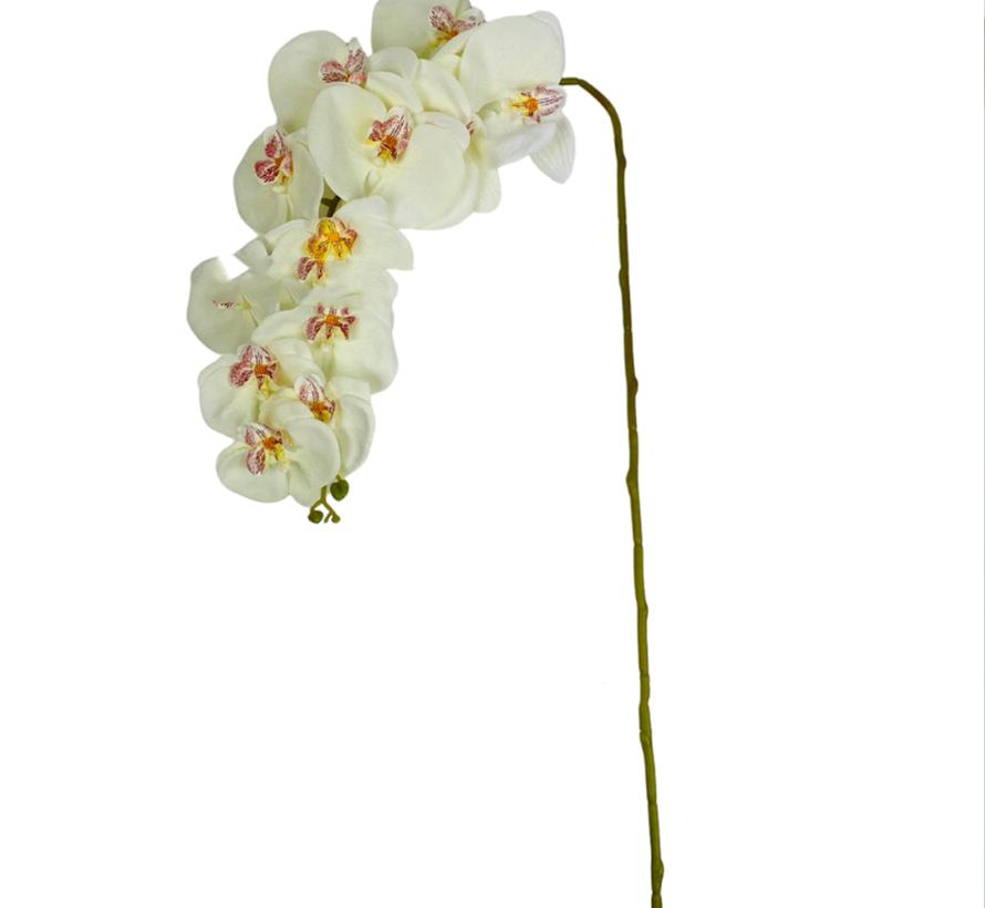 Kunstorchidee - Tak - Beige - Phalaenopsis