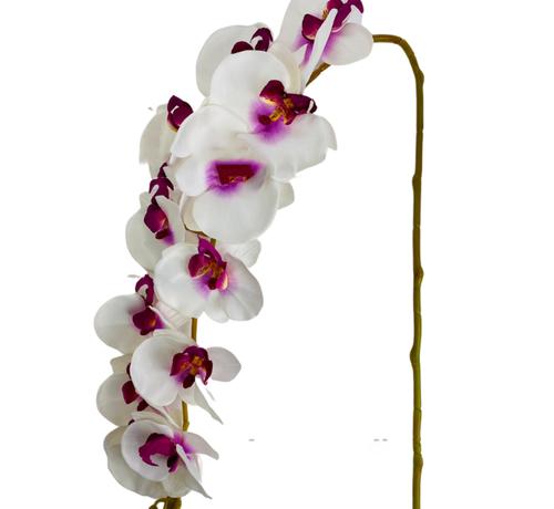 L&M Kunstorchidee - Tak - Wit Paars - Phalaenopsis