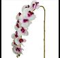 Kunstorchidee - Tak - Wit Paars - Phalaenopsis