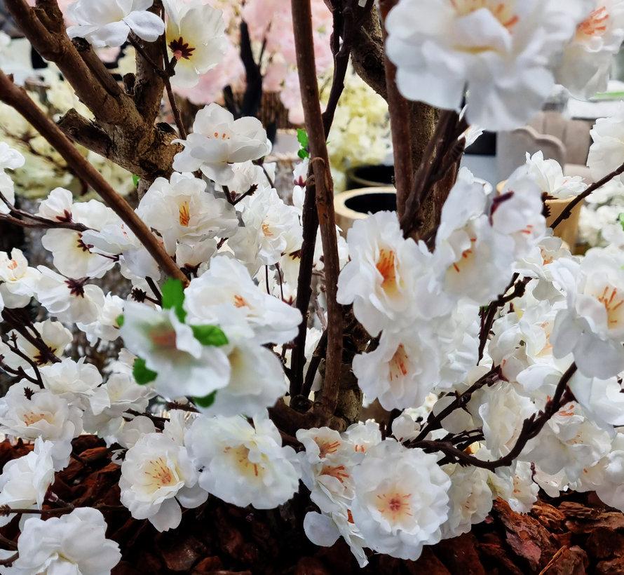 Schelpenvaas - Aurea - White Bloesem