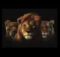 Africa Kings  Glasschilderij 160x110