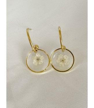 Dried Flower Earrings 'rêves sans fin' Gold - Stainless Steel