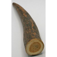 Piece of Antler 14 cm