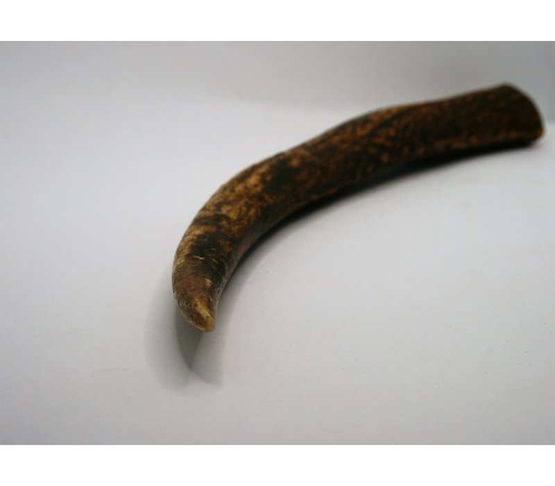 Piece of Antler 23 cm