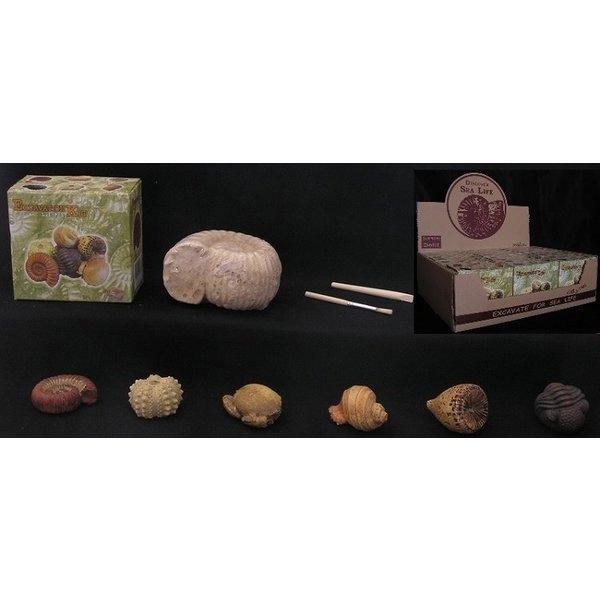 Egmont toys Uithakset fossiel