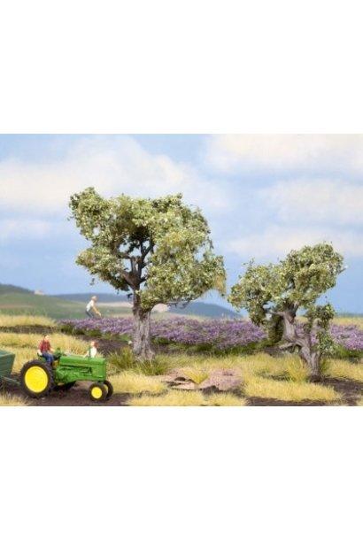 21995   Olivenbäume
