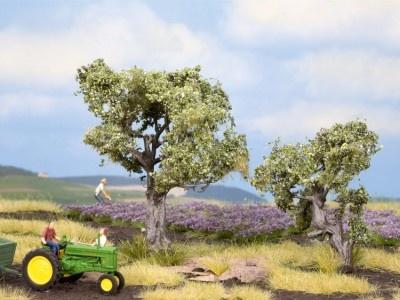 21995   Olivenbäume-1