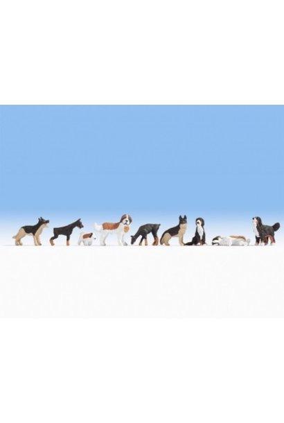 15717   Hunde