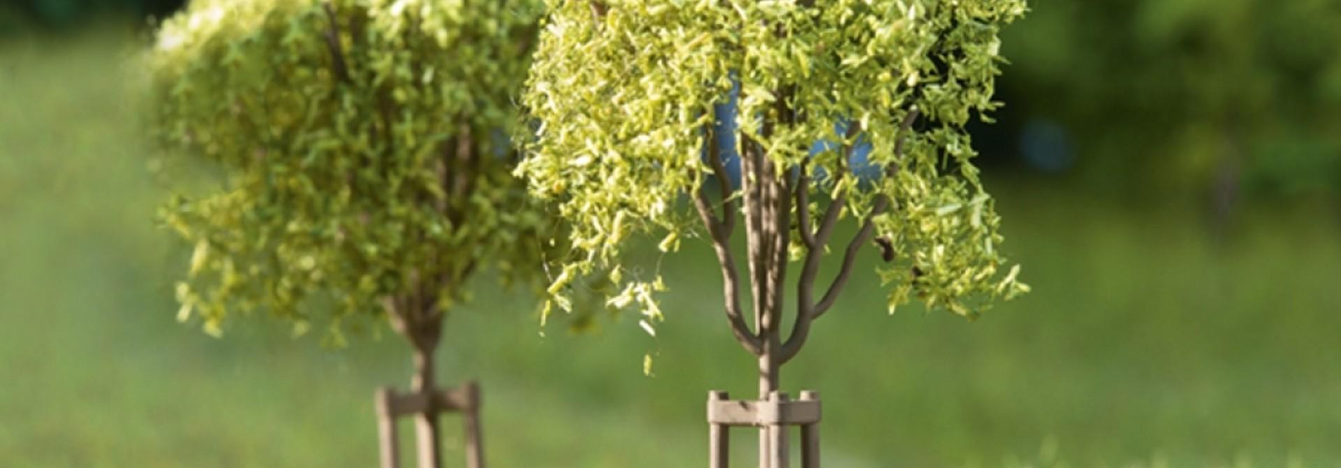 70950 Junge Bäume