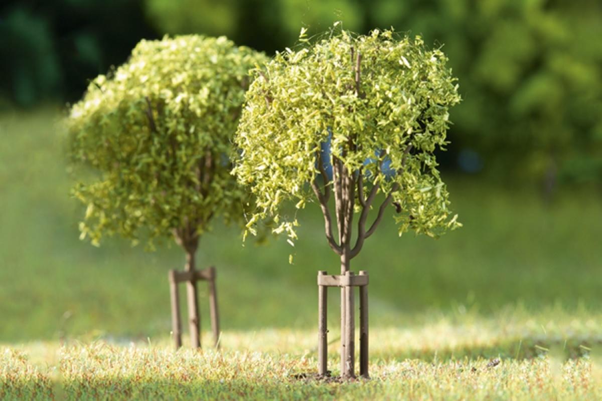 70950 Junge Bäume-1