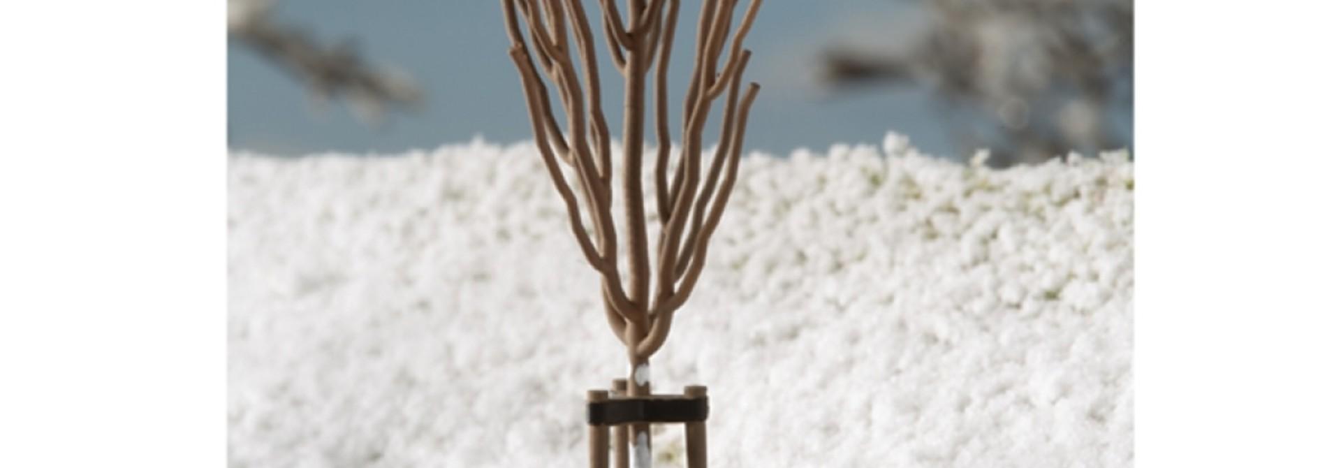 70951 Junge Bäume Winter