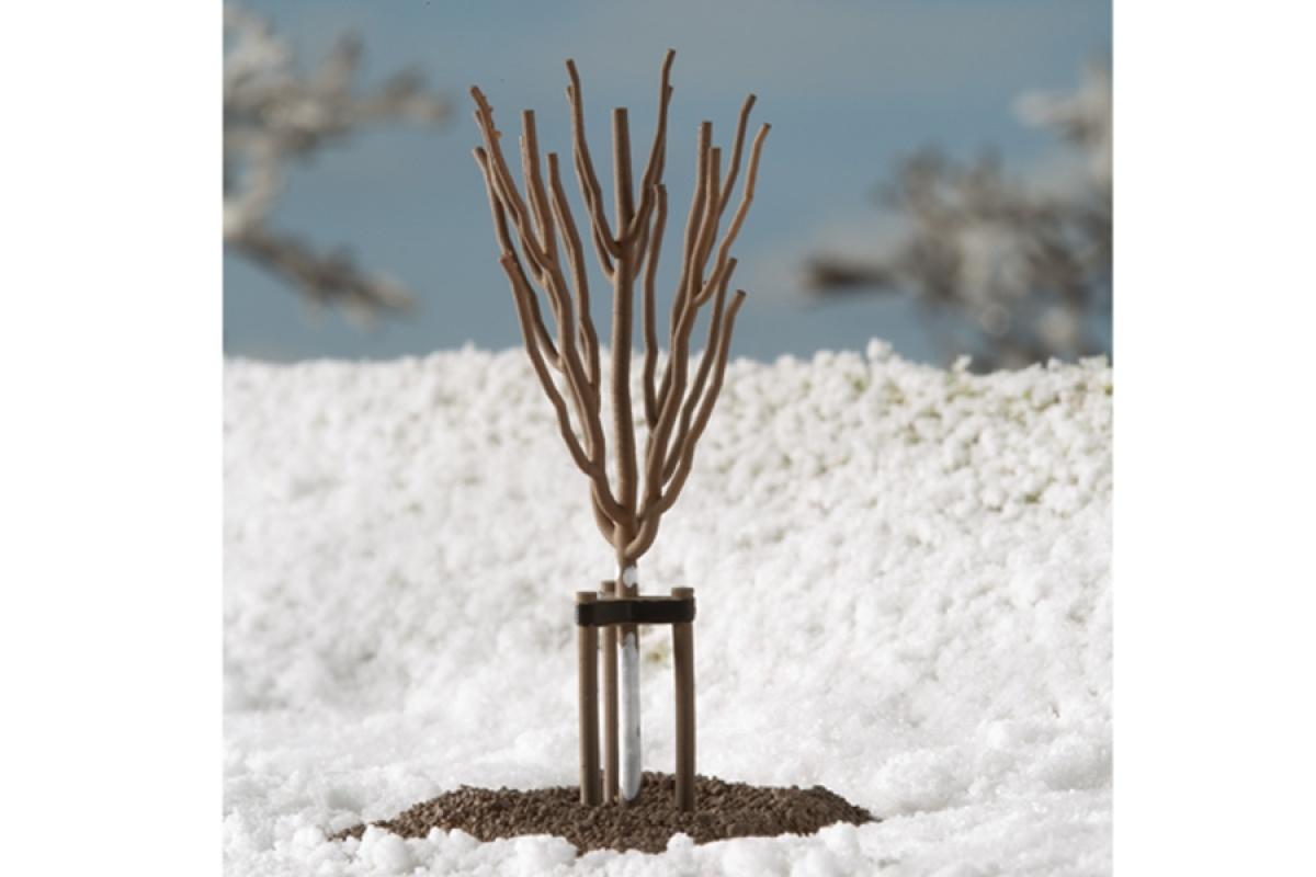 70951 Junge Bäume Winter-1
