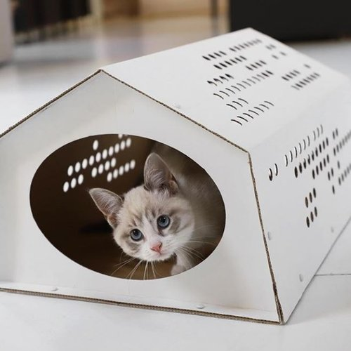 Cardboard Products for Pets