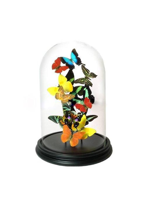 Vlinder in Stolp - XL