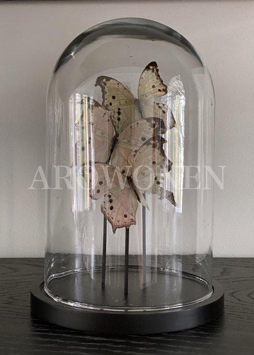 Butterfly bell jar - XL