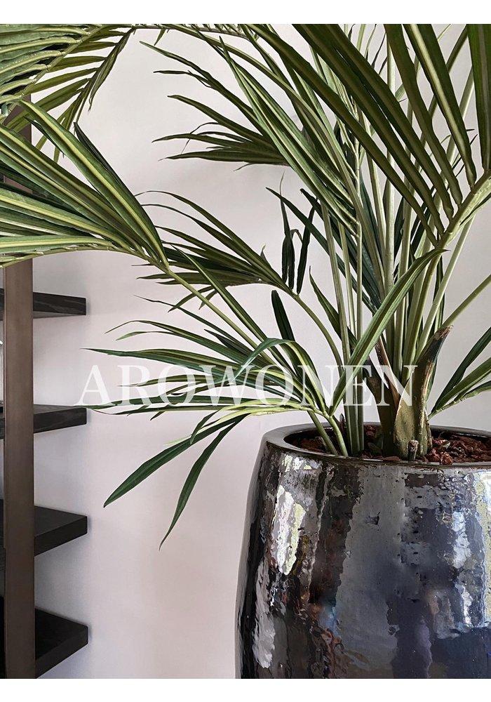 Plant - Geza palm