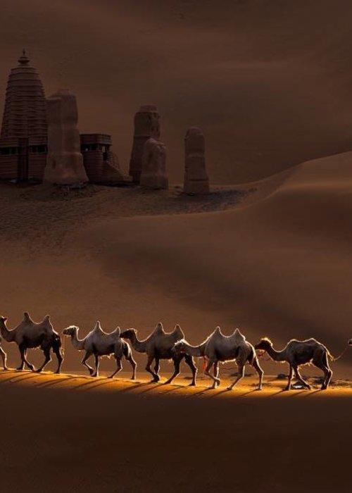 Art - Camels
