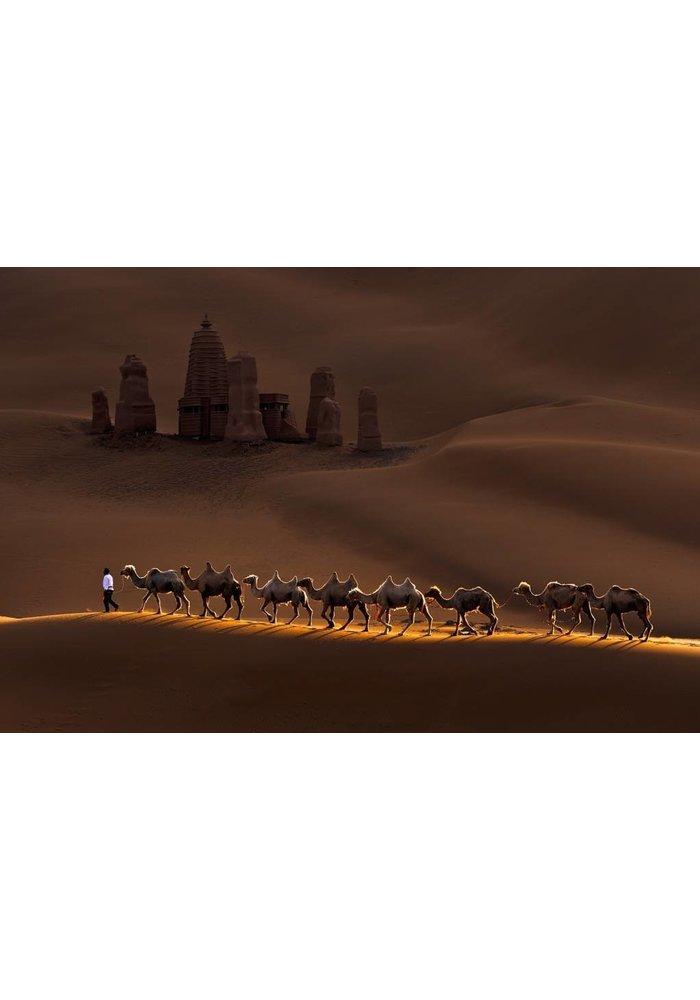 AArt - Camels