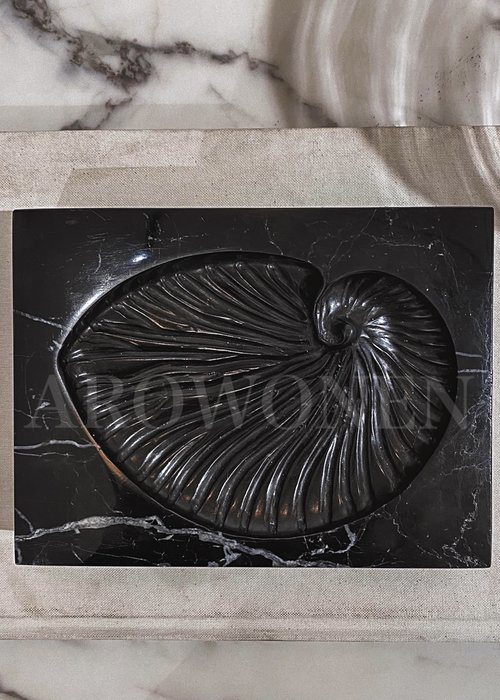 Object - Black Marble Shell fossil