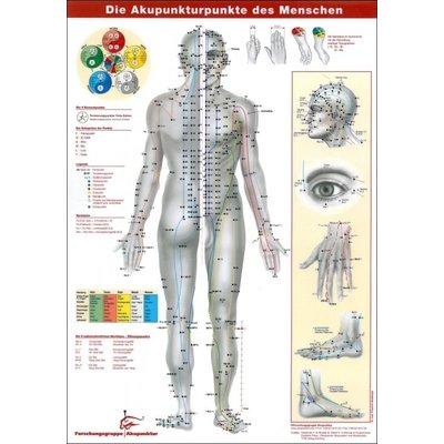 Akupunkturposter und -lernkarten