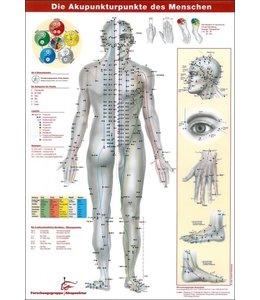 Die Akupunkturpunkte des Menschen Wandposter