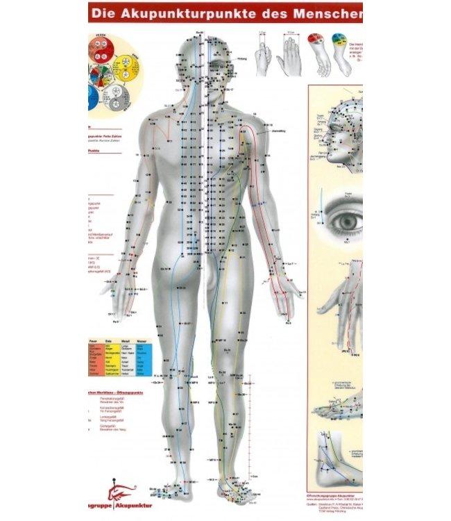 Die Akupunkturpunkte des Menschen als Schreibtischauflage