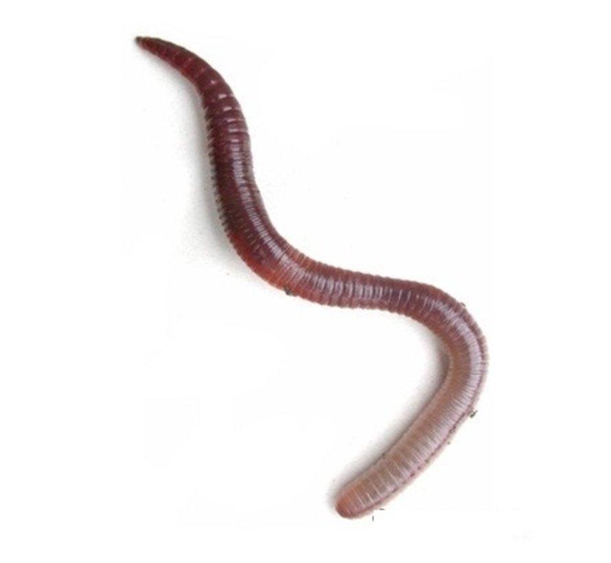 Compostwormen 0,5 kg