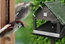 Fluitend de winter door met onze vogelvoederhuisjes