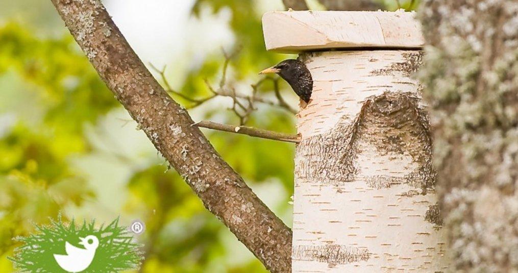 Hoe krijg je vogels in je tuin?