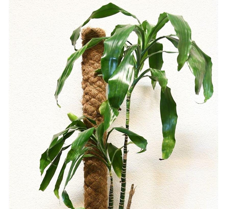 Kokosstok - 70 cm - ø 4 cm