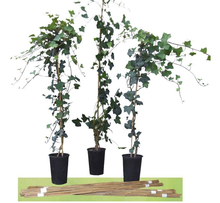Bamboestokken 60 cm - 10 stuks