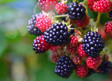 Rot - Fruchtbetont und Rund